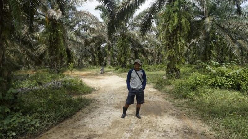 Perlindungan Petani dan Moratorium Sawit
