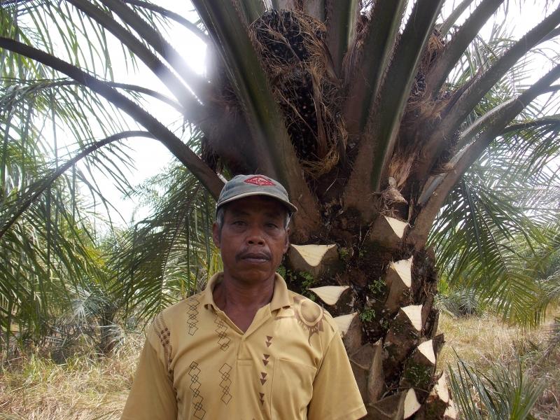 Petani Sawit Terhimpit Perusahaan Besar, Sri Mulyani Minta BPDPKS Benahi