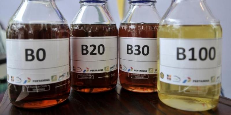 Program B30 Potensi Timbulkan Ketergantungan Impor Kelapa Sawit