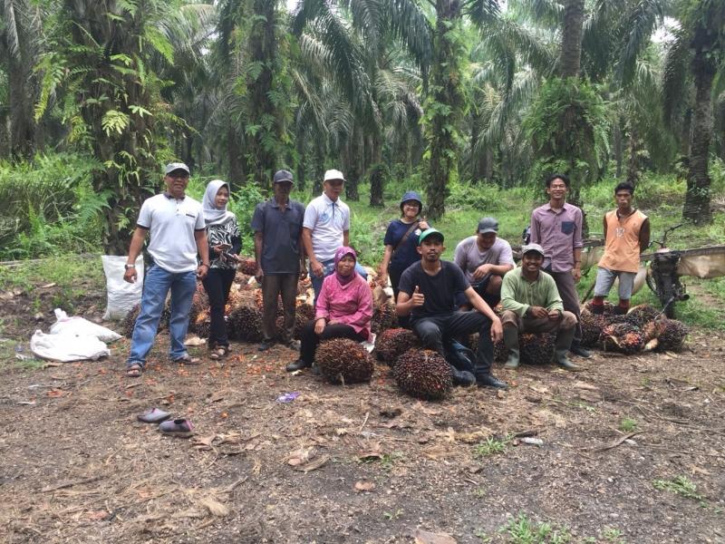 Sulbar Ekspor 8.000 Ton Cangkang Kelapa Sawit Ke Thailand