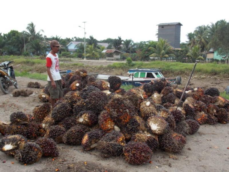 Beni Hernedi Wabup Muba sebagai Pembicara Dalam kegiatan rembug Nasional Petani kelapa sawit Indonesia