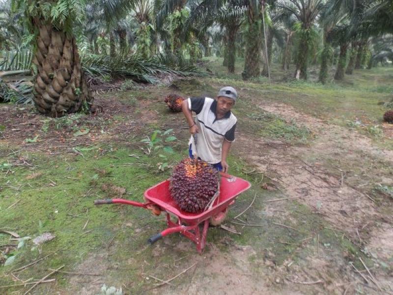 Lagi Pelaku Usaha Komit Memproduksi Minyak Sawit Berkelanjutan