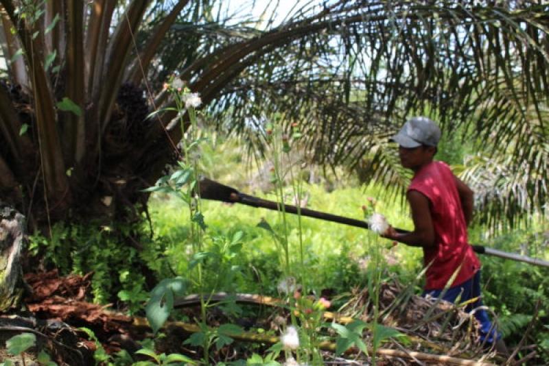 Dinas Pertanian Paser : Dukungan SPKS Sangat Membantu Pemerintah Daerah