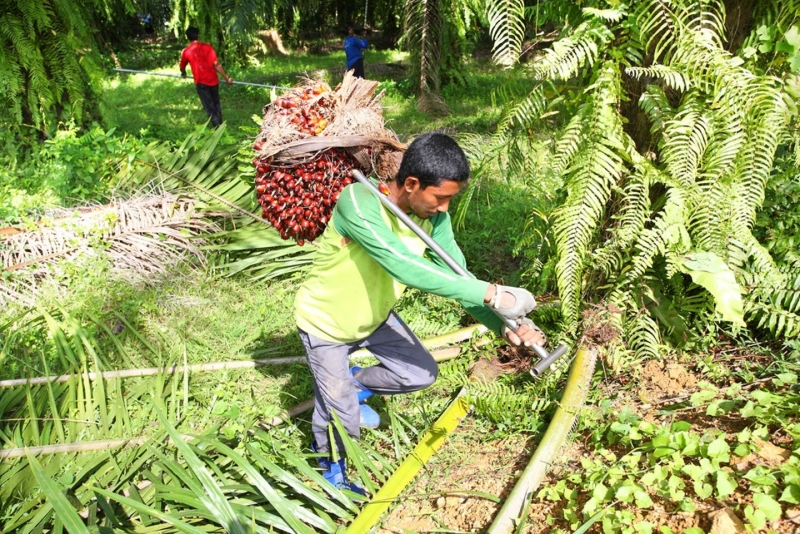 Small price increase in palm oil based products could save forests: Report