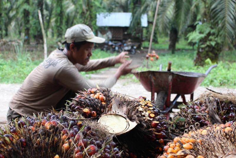 SPKS Bantah Dilibatkan Kementerian ESDM Di Program Biodiesel B30