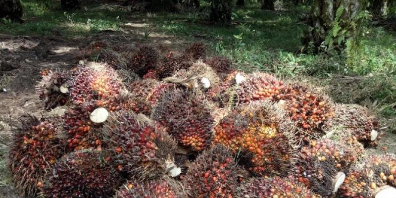 RSPO Dorong Produk Berlabel Minyak Sawit Berkelanjutan