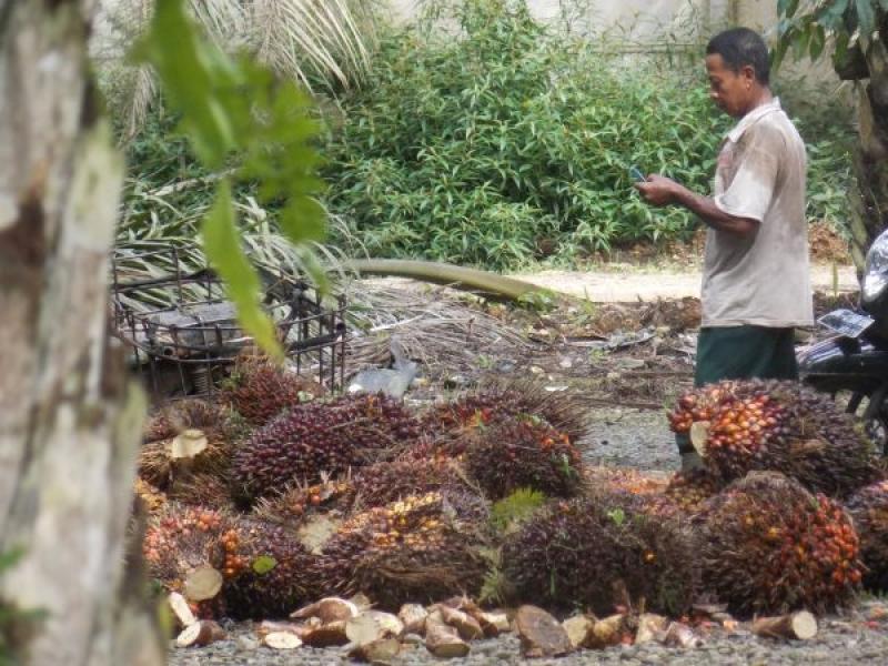 Lewat SMS Petani bisa mengetahui Informasi Harga TBS Provinsi Kalimantan Timur