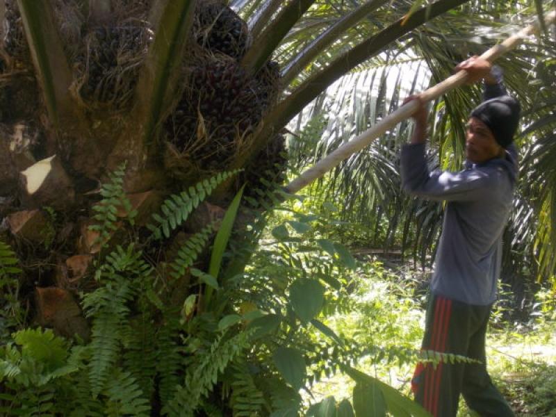 Pabrik Kelapa Sawit di Paser Diimbau Memberdayakan Petani Sekitar