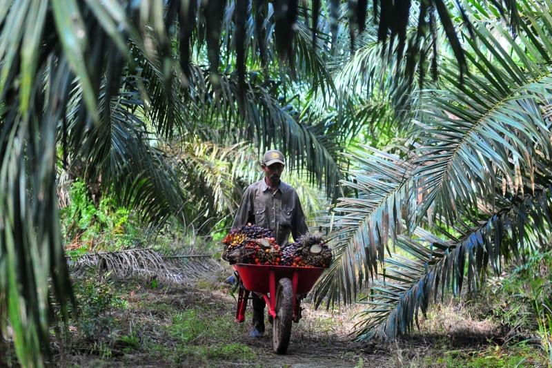 Kebijakan Biodiesel Dinilai Rugikan Petani Sawit