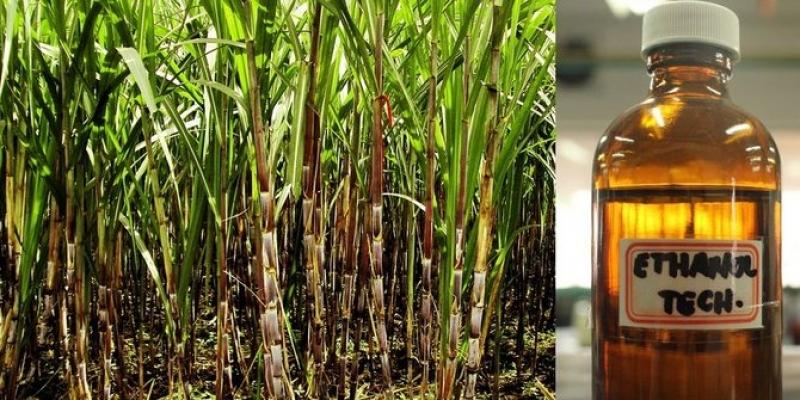 Proses Pembuatan Biodiesel Potensi Ciptakan Emisi Tinggi
