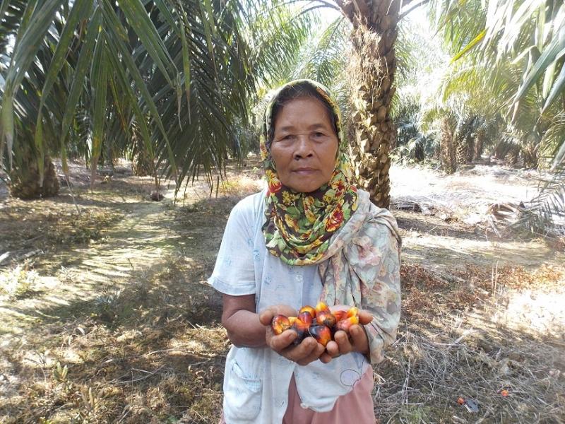 Petani Sawit Ingin Berpartisipasi Dalam Pengembangan Biodiesel
