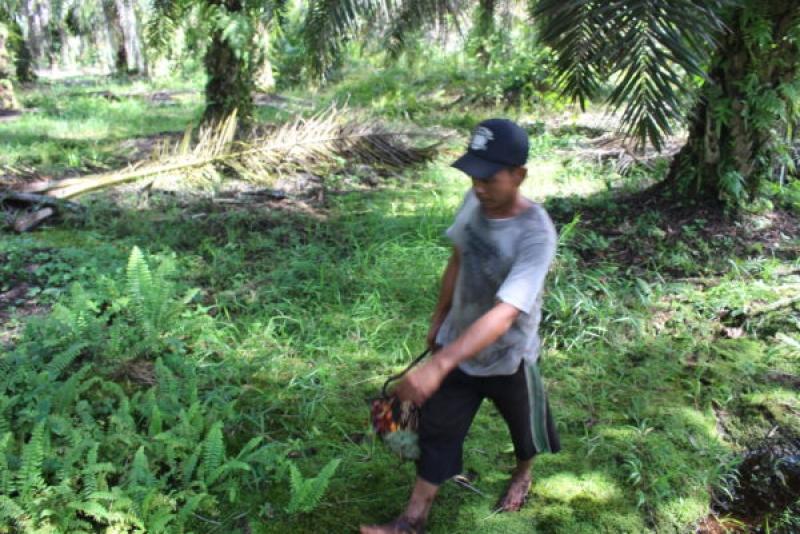 Serikat petani kelapa sawit menjabarkan prasyarat kemitraan petani dan perusahaan