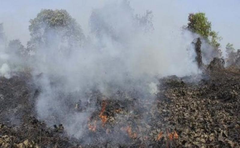 Cegah Karhutla di Perkebunan Kelapa Sawit, GAPKI Terapkan Pedoman Pencegahan