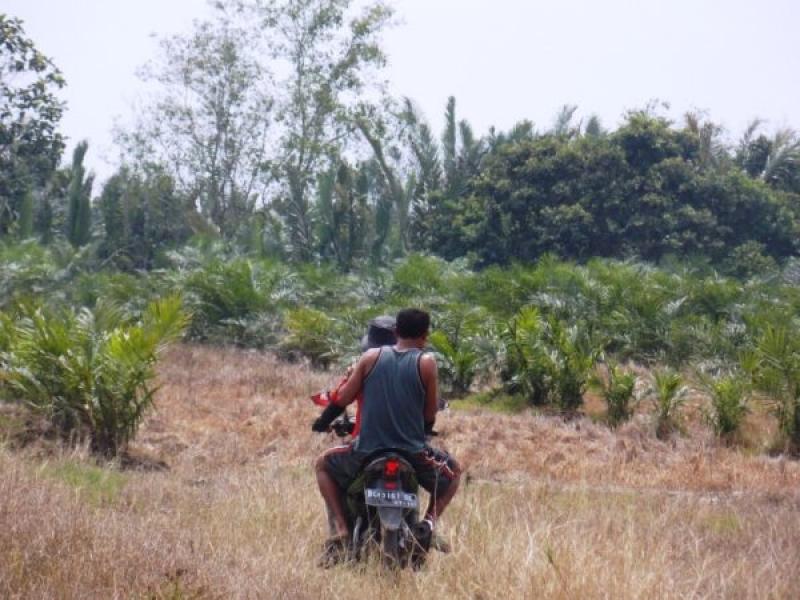 Pelatihan BUMDesa Bersama untuk Mewujudkan Desa Sawit Lestari di Pelalawan