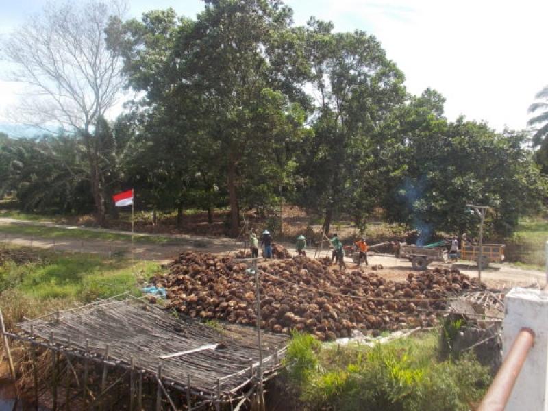 Pendekatan Mill Dalam Traceability Dan Dampaknya Bagi Petani Kecil Dan Visi Nol Deforestasi Home Berita Pendekatan Mill Dalam Traceability Dan Dampaknya Bagi Petani