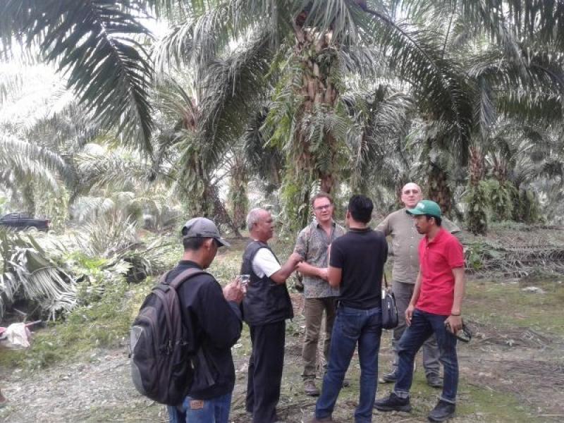 Petani Sawit Swadaya Berharap Inpres Moratorium Jadi Solusi Bagi Beragam Masalah