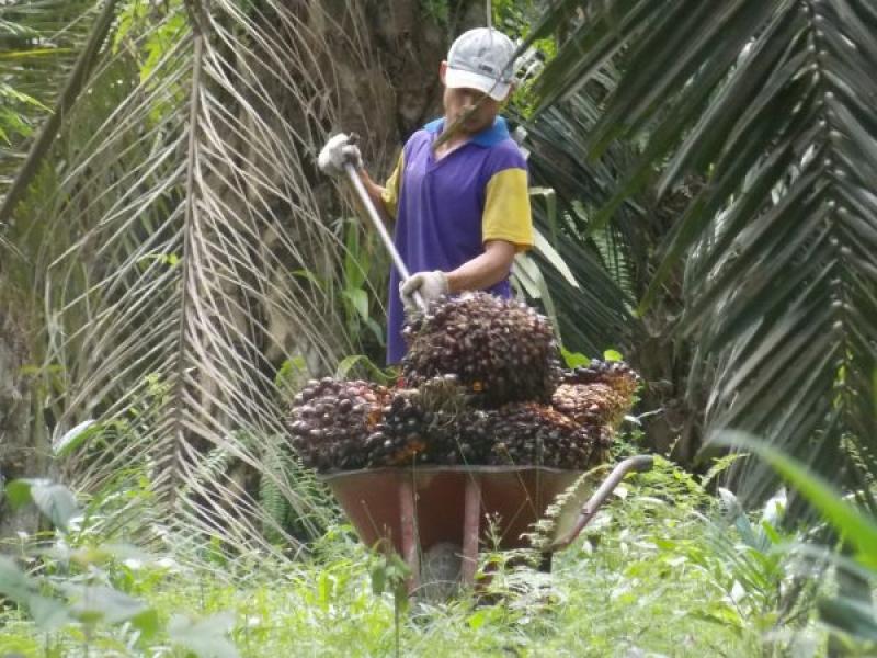 Petani Sawit Memilih Curhat Habis-Habisan di Rembug Nasional