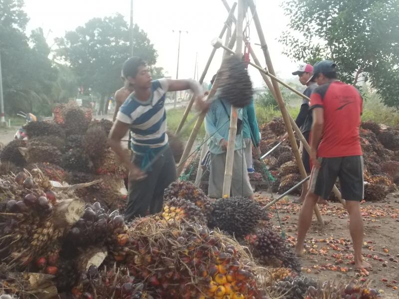 Penyebab Petani Sawit di Jambi Tak Mau Replanting, Kepala Dinas Perkebunan – Agusrizal Beri Paparan